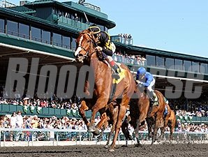 Judy the Beauty wins the 2014 Madison Stakes.