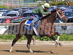 Alpha's Kentucky Derby breeze 4/30/2012