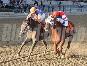 Stay Thirsty wins the 2012 Cigar Mile.