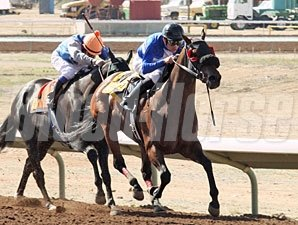 Our Choice wins the 2012 Jack Cole Handicap.