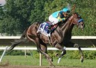 Paynter Out of Travers Stakes Consideration