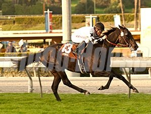 Slim Shadey wins the 2013 San Marcos Stakes.