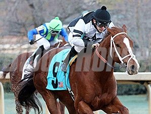 Apprehender wins the 2014 King Cotton Stakes.