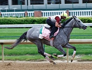 Flashy Gray Scratched from Kentucky Oaks