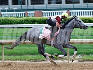 Flashy Gray works at Churchill Downs for the Kentucky Oaks.
