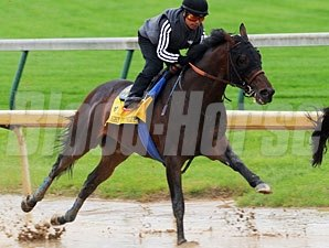 Midnight Interlude works at Churchill Downs 5/2/2011.