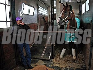 California Chrome riding in his transport van April 28, 2014.