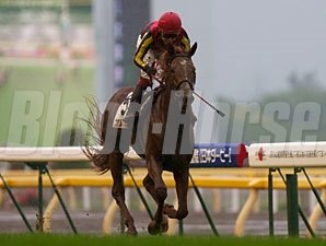 Orfevre wins the Japanese Derby.