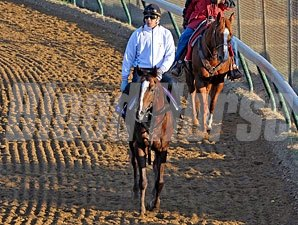 Espoir City at Churchill Downs for the Breeders' Cup.