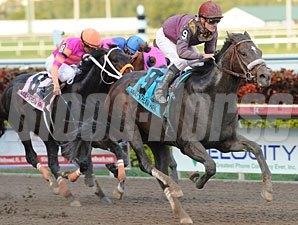 Dialed In wins the 2011 Holy Bull Stakes.