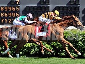 Wise Dan wins the 2014 Woodford Reserve Turf Classic.