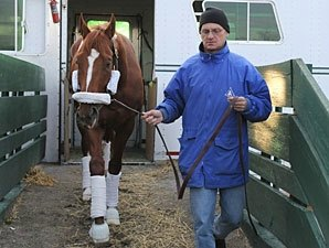 Curlin Ships Back to Belmont from Dubai
