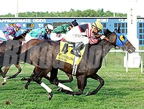Malibu Yankee wins the 2014 Opelousas Stakes.