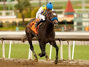 The Factor Headlines Crowded Rebel Stakes