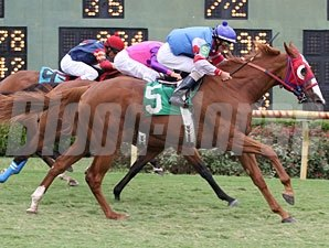 Pretty Not wins the 2012 Louisiana Cup Distaff.