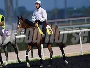 Mshawish, Dubai World Cup 2014