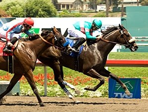 Tough Tiz's Sis Tries Zenyatta in Hirsch