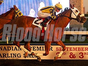 Pender Harbour wins the 2014 Elgin Stakes.