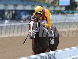 Dreaming of Julia wins the 2012 Meadow Star.