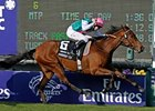 Filly Sarafina Favorite for BC Turf