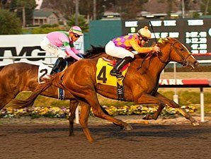 Starlet Contenders Return in Santa Ysabel