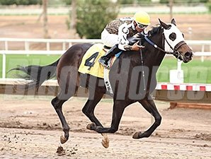 Rockin Home wins the 2013 Arizona Breeders' Futurity Colts and Geldings.