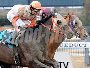 Ah Day wins the 2009 Toboggan.