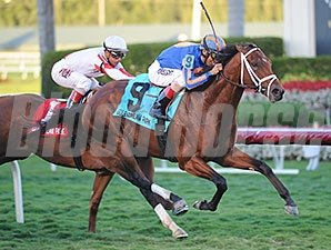 Gala Award wins the 2014 Palm Beach.