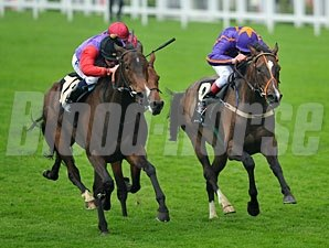 Estimate wins the 2013 Ascot Gold Cup.