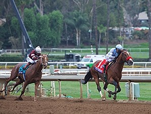 Goldencents Horse Profile Bloodhorse