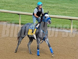 Creative Cause jogs towards the Kentucky Derby 4/20/21012