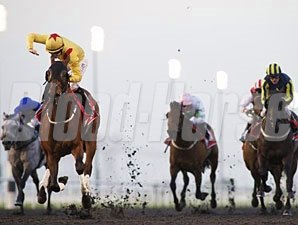Reynaldothewizard wins the 2013 Mahab al Shimaal.