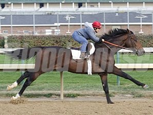 First Dude works towards the Breeders' Cup Oct. 24, 2010.