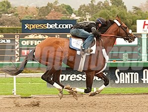 Mucho Macho Man works at Santa Anita March 2, 2014.