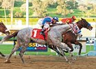 Baffert Trainee Tweebster Euthanized