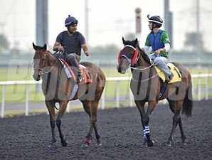 Invincible Ash (left) and Ocean Park - Dubai, March 26, 2013.