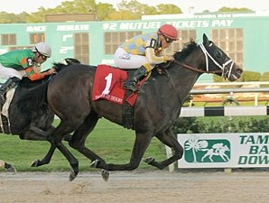 Prospective Shows Promise in Tampa Derby Win