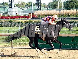Aireofdistinction wins the 2014 Open Mind Stakes.