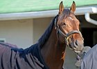 Derby Winner Orb Works at Fair Hill