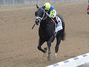 Shanghai Bobby Clear Leader Among 2YO Males