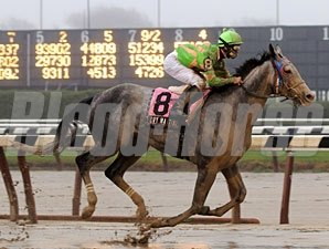Dry Martini wins the 2008 Stuyvesant