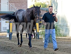 Pant On Fire with Kelly Breen, Breeders' Cup 2014.