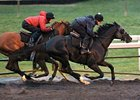 Dullahan, Others Work for Breeders' Cup