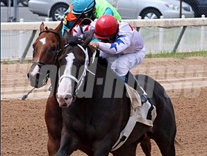 My Star Runner wins the 2011 LA Cup Sprint.