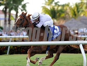 Joes Blazing Aaron wins the 2011 Palm Beach.