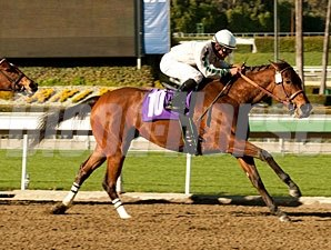 Ultra Blend wins the 2011 Valentine Dancer.