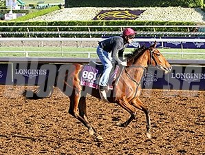 Qualify - Breeders' Cup 2014