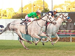 Egg Drop wins the Matriarch Stakes.