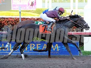 Dialed In wins the 2011 Florida Derby.