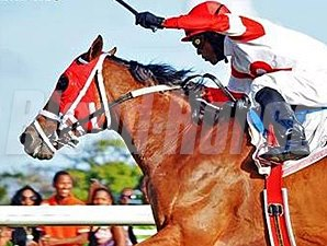 Major Marvel wins the Sandy Lan Barbados Gold Cup.